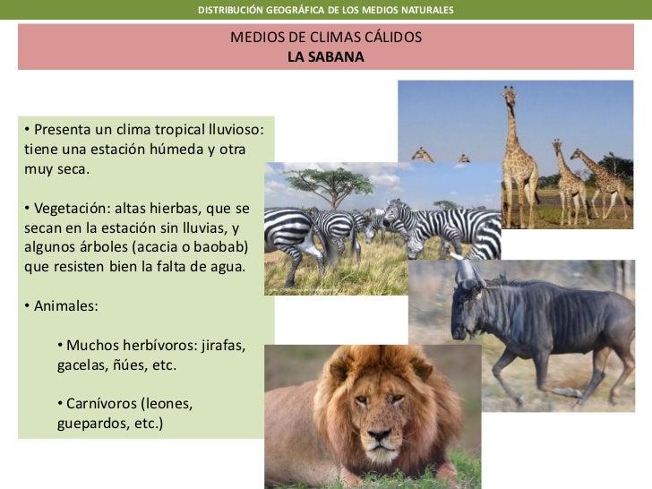 DISTRIBUCIÓN GEOGRÁFICA DE LOS MEDIOS NATURALES                                   MEDIOS DE CLIMAS CÁLIDOS                ...