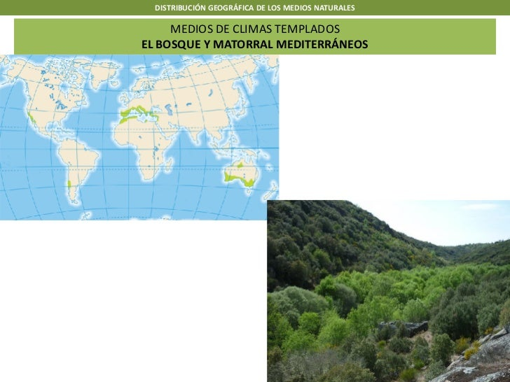 DISTRIBUCIÓN GEOGRÁFICA DE LOS MEDIOS NATURALES     MEDIOS DE CLIMAS TEMPLADOSEL BOSQUE Y MATORRAL MEDITERRÁNEOS