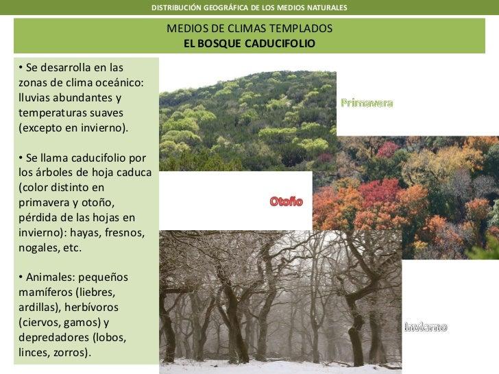 DISTRIBUCIÓN GEOGRÁFICA DE LOS MEDIOS NATURALES                              MEDIOS DE CLIMAS TEMPLADOS                   ...