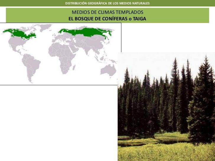 DISTRIBUCIÓN GEOGRÁFICA DE LOS MEDIOS NATURALES  MEDIOS DE CLIMAS TEMPLADOS EL BOSQUE DE CONÍFERAS o TAIGA