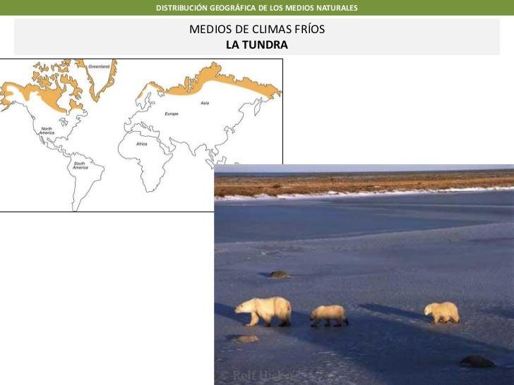 DISTRIBUCIÓN GEOGRÁFICA DE LOS MEDIOS NATURALES       MEDIOS DE CLIMAS FRÍOS            LA TUNDRA