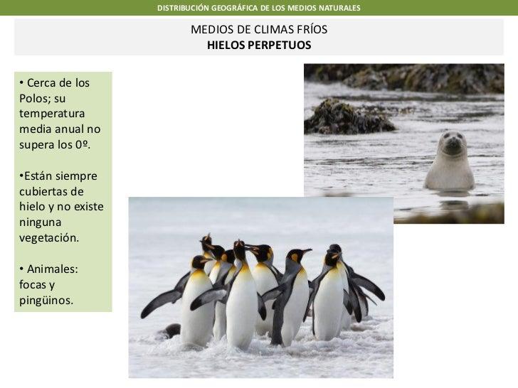 DISTRIBUCIÓN GEOGRÁFICA DE LOS MEDIOS NATURALES                           MEDIOS DE CLIMAS FRÍOS                          ...