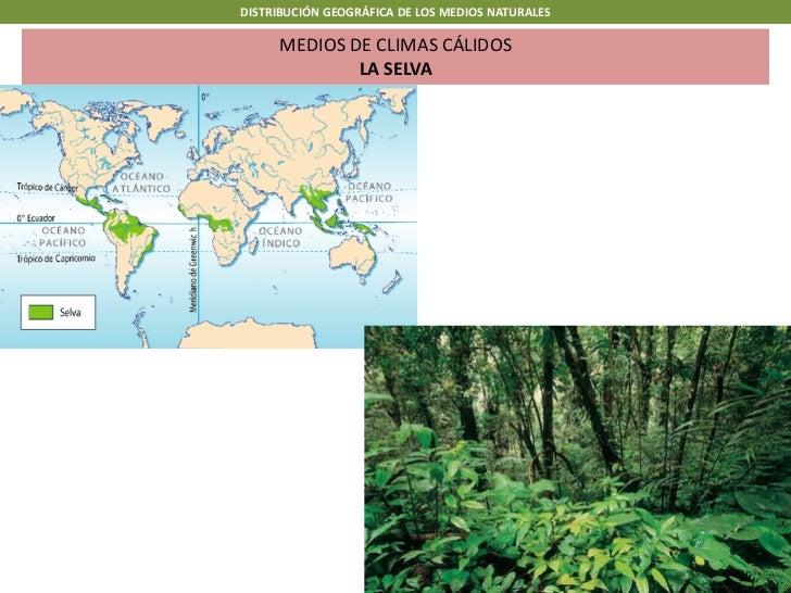 DISTRIBUCIÓN GEOGRÁFICA DE LOS MEDIOS NATURALES      MEDIOS DE CLIMAS CÁLIDOS              LA SELVA
