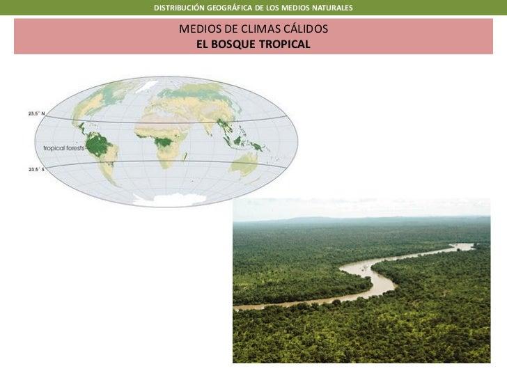 DISTRIBUCIÓN GEOGRÁFICA DE LOS MEDIOS NATURALES      MEDIOS DE CLIMAS CÁLIDOS        EL BOSQUE TROPICAL