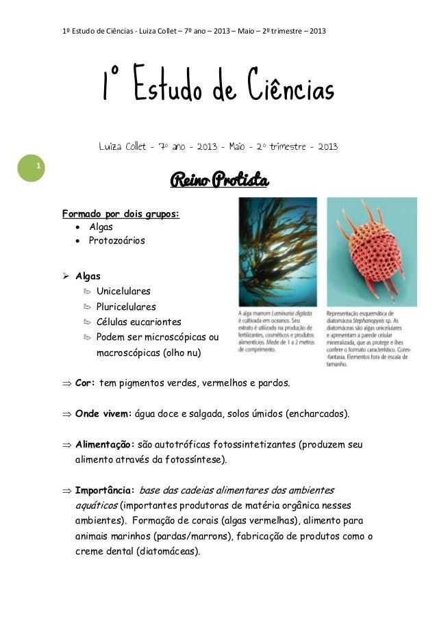1º Estudo de Ciências - Luiza Collet – 7º ano – 2013 – Maio – 2º trimestre – 2013  1º Estudo de Ciências Luiza Collet – 7º...
