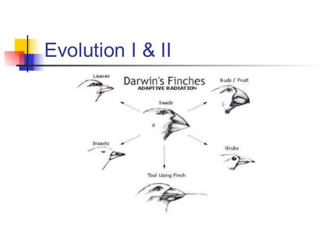 a description of jonathan weiner the beak of the finch a story of evolution in new york by alfred a