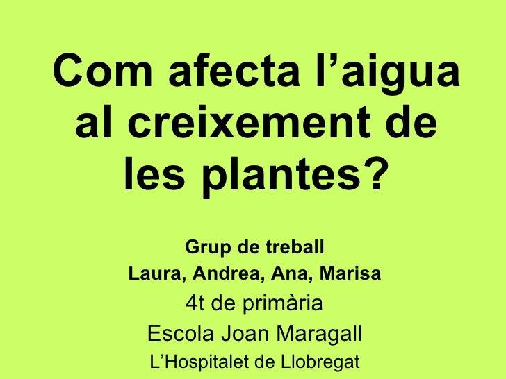 Com afecta l'aigua al creixement de les plantes? Grup de treball Laura, Andrea, Ana, Marisa 4t de primària Escola Joan Mar...