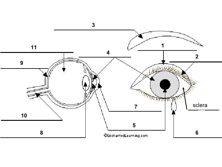 chapter 14 the human eye lesson 1