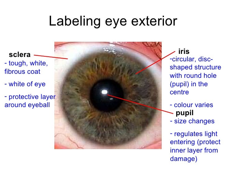 Chapter 14 The Human Eye Lesson 1 Anatomy Of The Human Eye