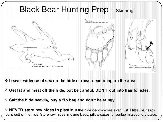 bear hunting diagram wiring diagram all data Red Fox Diagram bear hunting diagram wiring diagram gray wolf hunting diagram bear hunting diagram