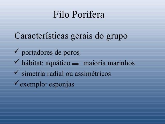 Filo Porifera Características gerais do grupo  portadores de poros  hábitat: aquático maioria marinhos  simetria radial...