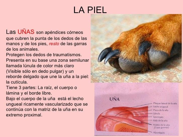 1 fisiologia de la piel