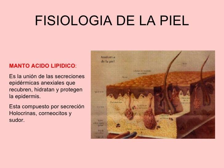 Metabolismo basal definicion pdf
