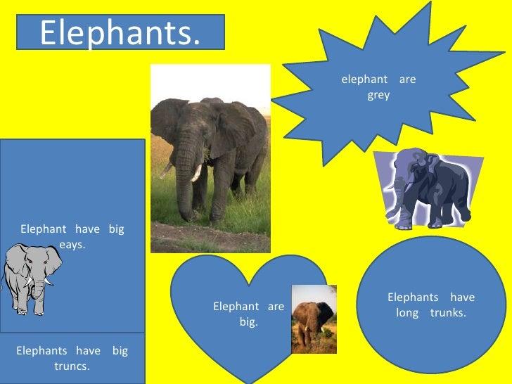Elephants.                                    elephant are                                         greyElephant have big  ...
