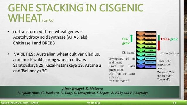 gene stacking in crop plants final