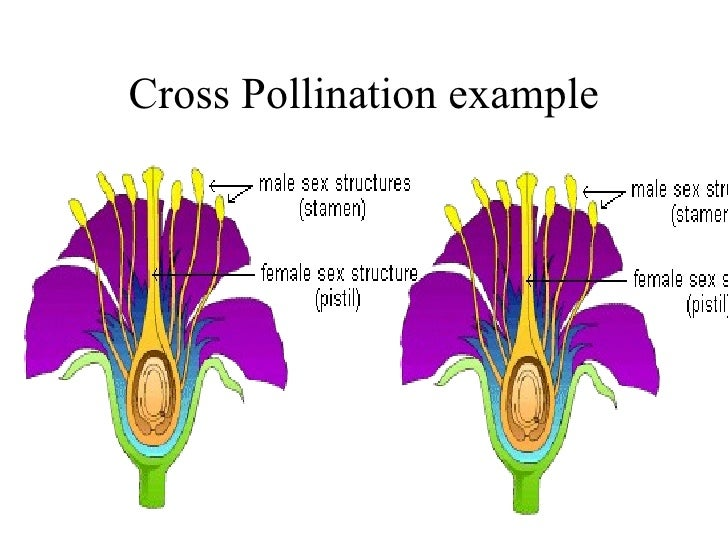 Pollination introduction and types of pollination in plants.