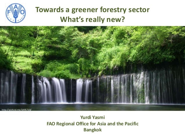 Towards a greener forestry sector What's really new? http://pichost.me/1495718/ Yurdi Yasmi FAO Regional Office for Asia a...