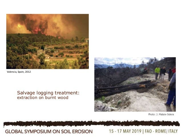 Influence of mosses on soil hydraulic conductivity, penetration resistance and water repellency six years after a post-fire salvage logging treatment  Slide 2
