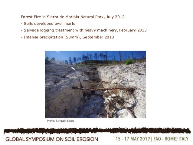 Influence of mosses on soil hydraulic conductivity, penetration resistance and water repellency six years after a post-fire salvage logging treatment  Slide 3