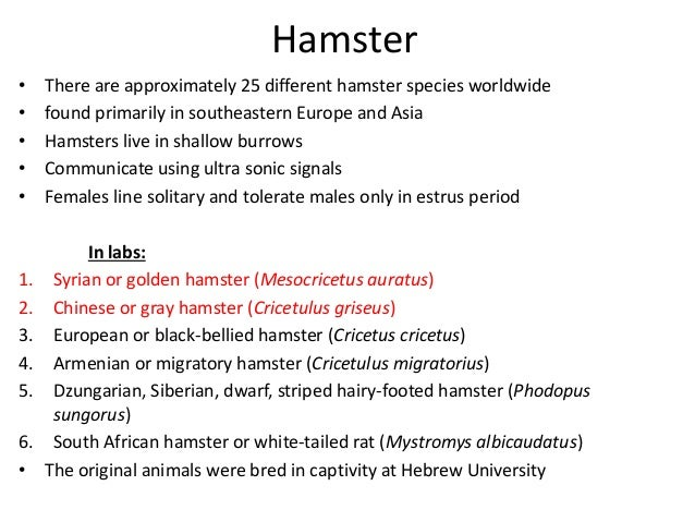 Hamster - Bacterial, Viral, Mycotic, Parasitic and Non