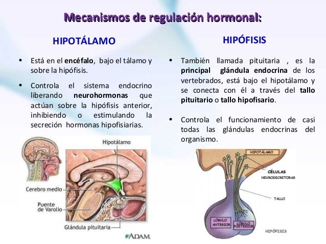 1 homeostasis y sistema endocrino env
