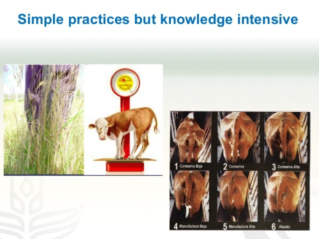 Simple practices but knowledge intensive
