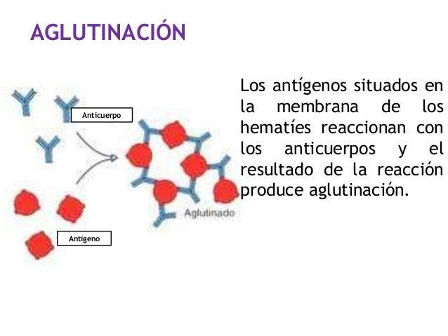 AGLUTINACIÓN Anticuerpo Los antígenos situados en la membrana de los hematíes reaccionan con los anticuerpos y el resultad...