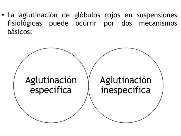 • La aglutinación de glóbulos rojos en suspensiones fisiológicas puede ocurrir por dos mecanismos básicos: Aglutinación es...