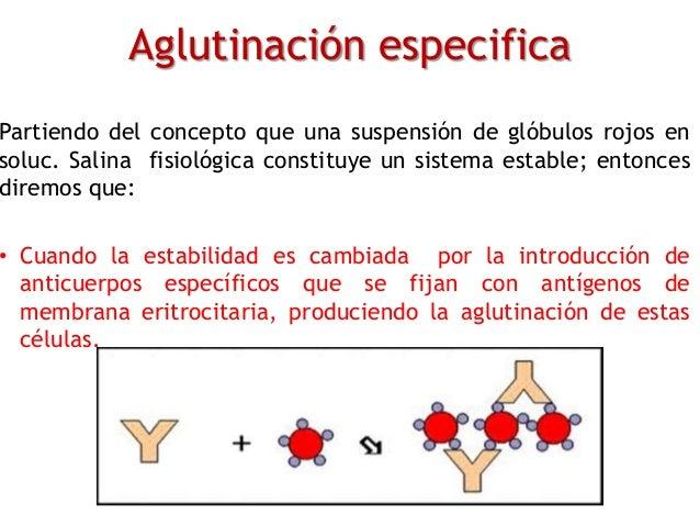 Aglutinación especifica Partiendo del concepto que una suspensión de glóbulos rojos en soluc. Salina fisiológica constituy...