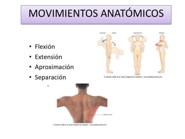 1) introducción a la anatomía