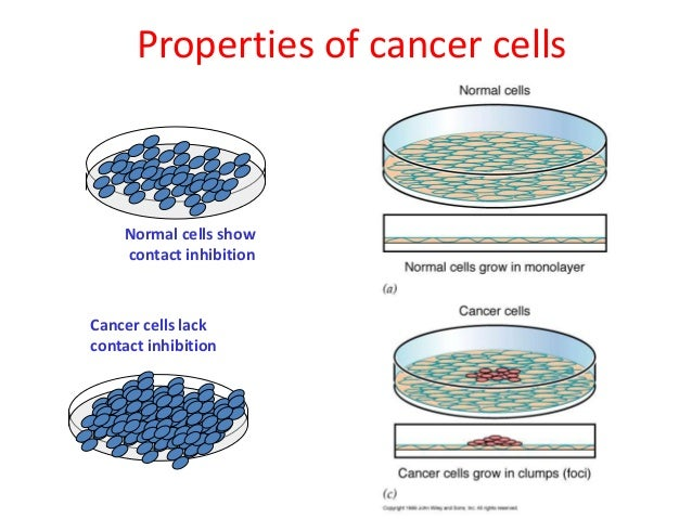 chemistry of cancer The proposal to classify titanium dioxide as a chemical suspected of causing cancer was based on the discovery that high levels of titanium dioxide nanoparticles caused respiratory tract cancers in rodents.