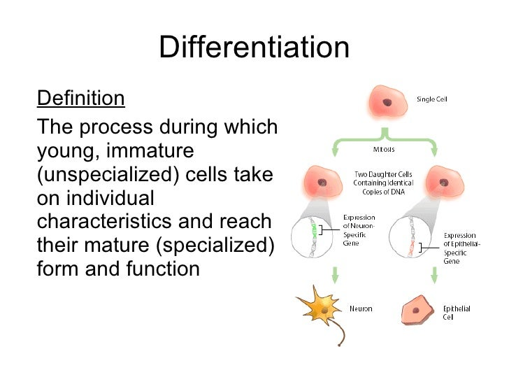 an introduction to the process of cell division called mitosis An introduction to molecular biology/cell an introduction to molecular biology divide by a process called binary fission the process of mitosis is complex.