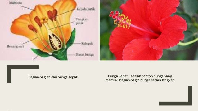 1 Ipa Bagian2 Bunga