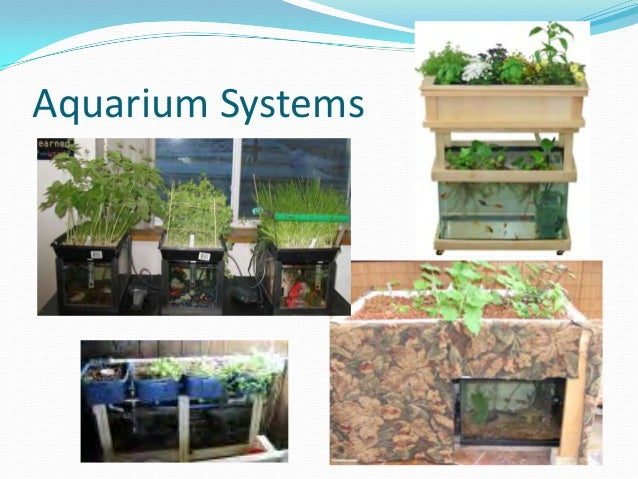 Aquaponics growing fish and plants together for Fish and plants in aquaponics