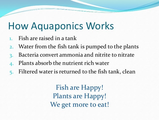 Aquaponics growing fish and plants together for Feed and grow fish free no download