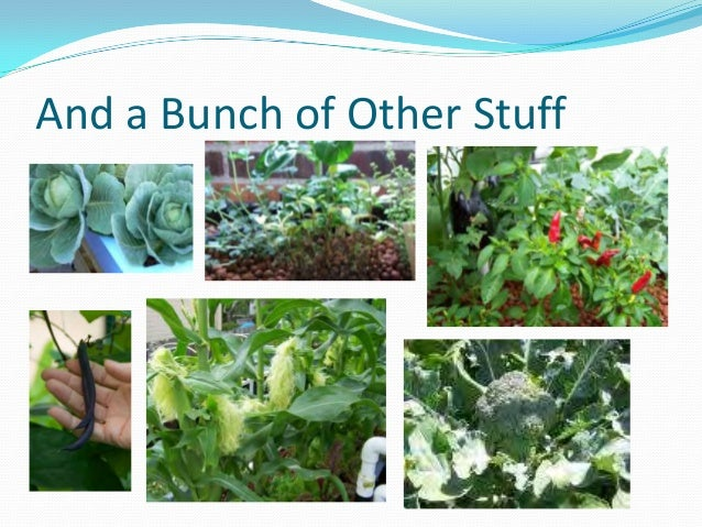 Aquaponics growing fish and plants together for Growing plants with fish
