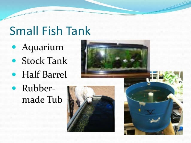 Aquaponics Growing Fish And Plants Together