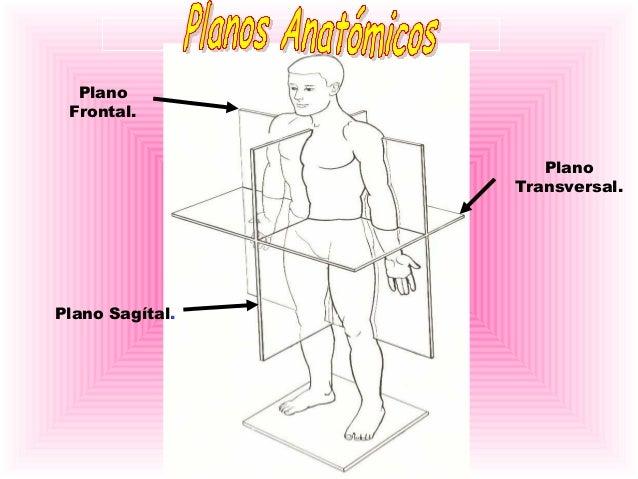 ANATOMIA 1 laminas basicas de medicina