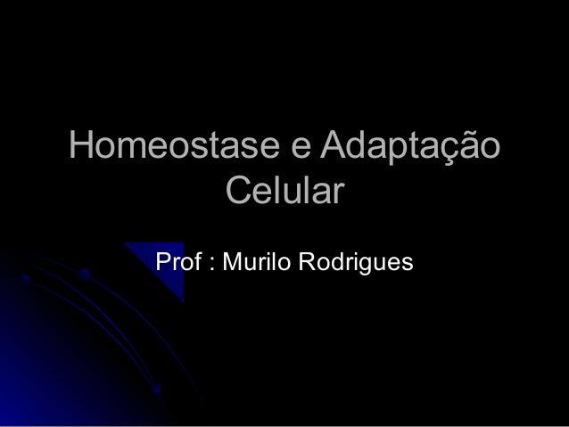 Homeostase e AdaptaçãoHomeostase e Adaptação CelularCelular Prof : Murilo RodriguesProf : Murilo Rodrigues