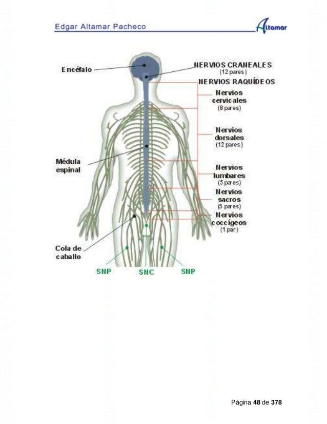 Lujo Modelo De Anatomía Caballo Visible Bosquejo - Imágenes de ...