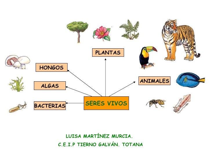 SERES VIVOS ANIMALES PLANTAS ALGAS BACTERIAS HONGOS LUISA MARTÍNEZ MURCIA.  C.E.I.P TIERNO GALVÁN. TOTANA