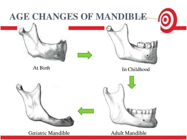 Adult mandible images