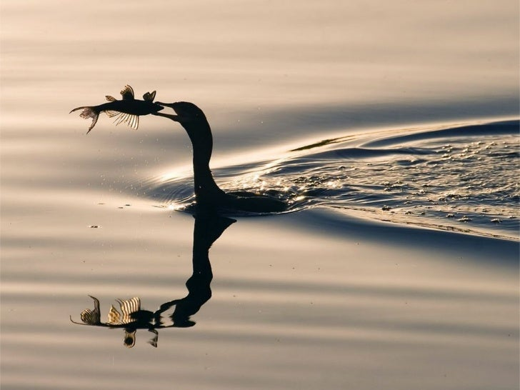 1m mb 4_national_geographic