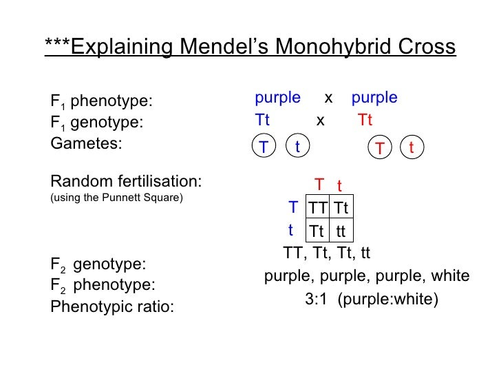 Chapter 19 Heredity Lesson 1 - Monohybrid Cross and Test Cross