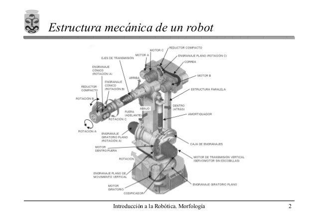 1 Morfologia