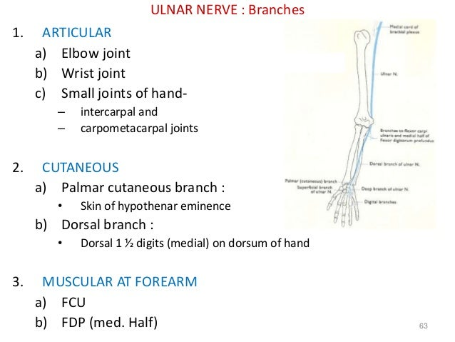Ulnar nerve motor supply hand for Carizma motors lubbock tx