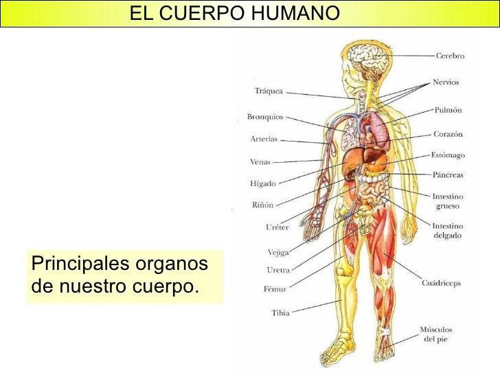 Lminas del cuerpo humano - Guia Sanitaria 67