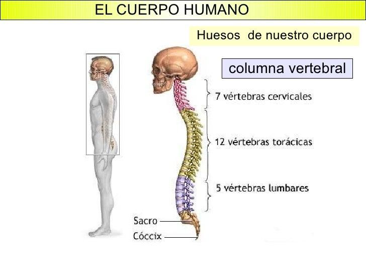 el cuerpo humano 15 728