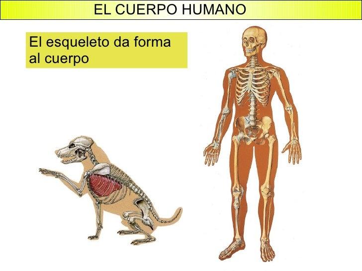 El cuerpo humano for Interior del cuerpo humano