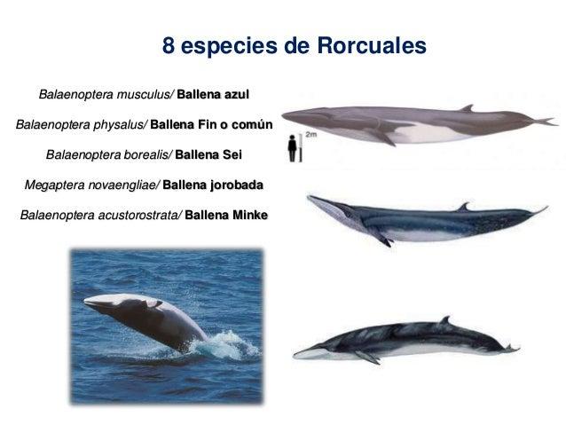 1o modulo Curso de extensión curricular Conservación de Ballenas y De…